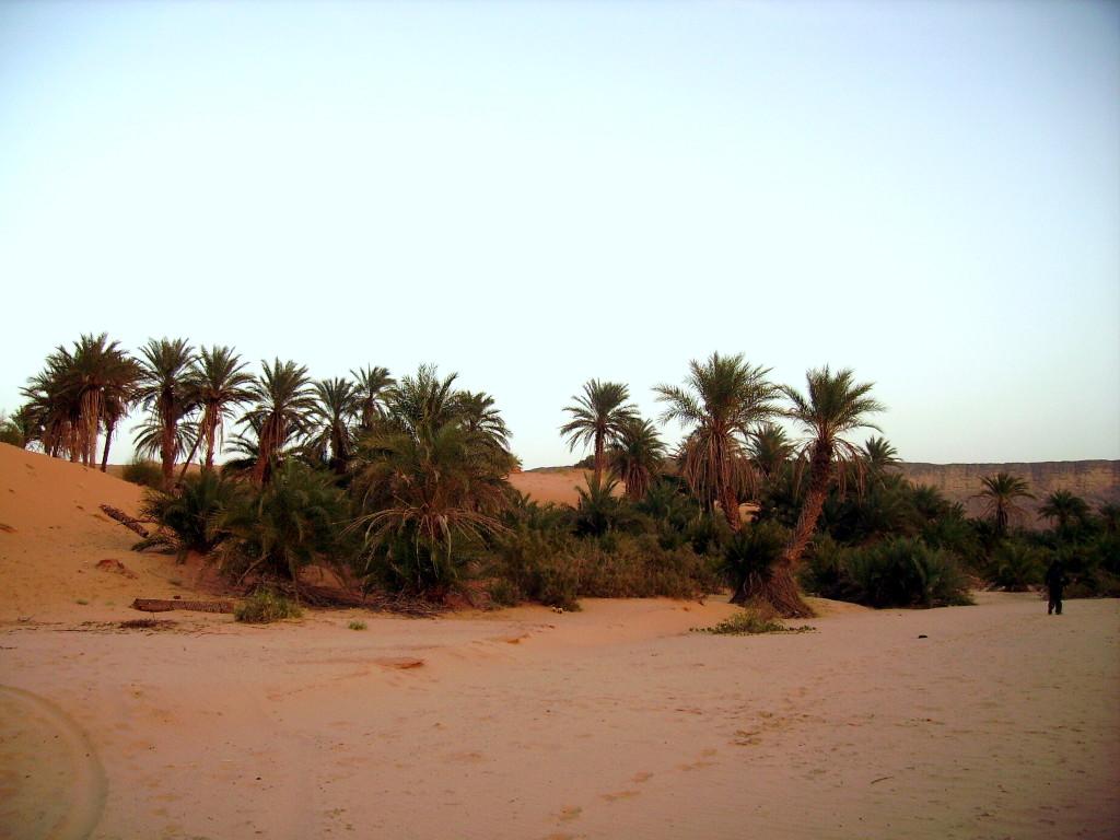 Oasi di Terguit - Mauritania