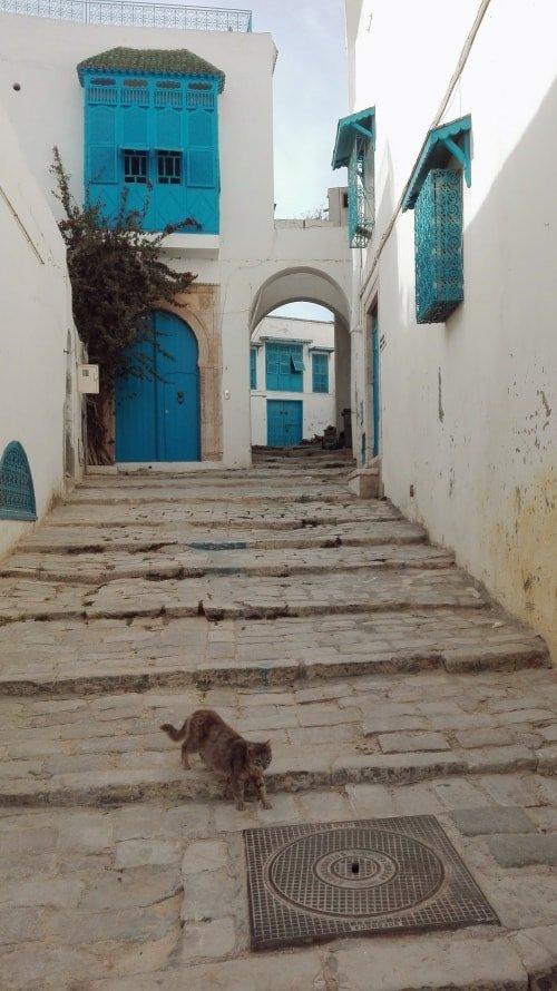 Sidi bou said una finestra che si affaccia sul mediterraneo - Finestra che si apre ...