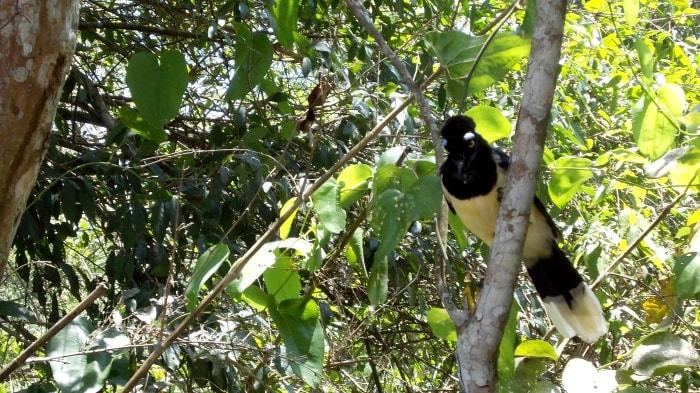 """alt=""""La fauna del Parco Nazionale d'Iguazu"""""""