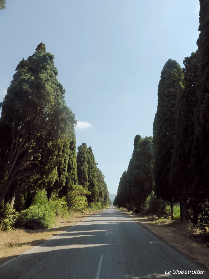 """alt=""""il Viale dei Cipressi di Bolgheri"""""""