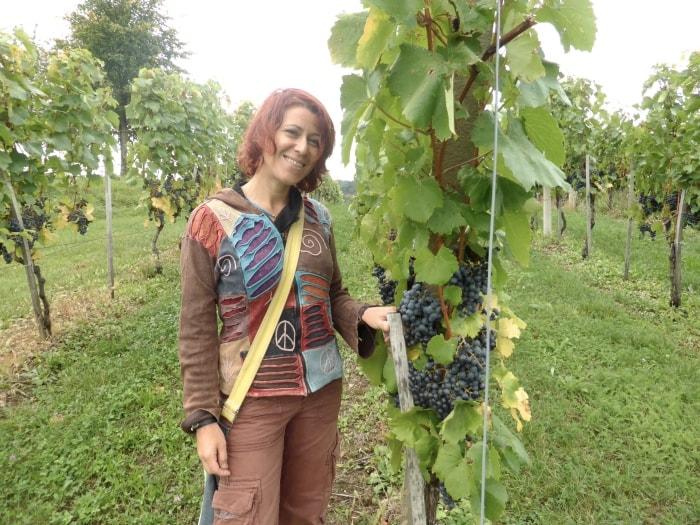 """alt=""""Tra le vigne della Bela Krajina"""""""