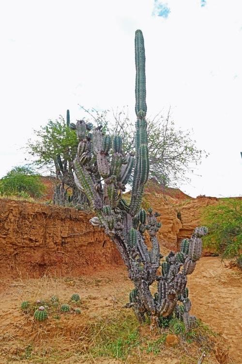 """alt=""""Vita al deserto de la Tatacoa"""""""