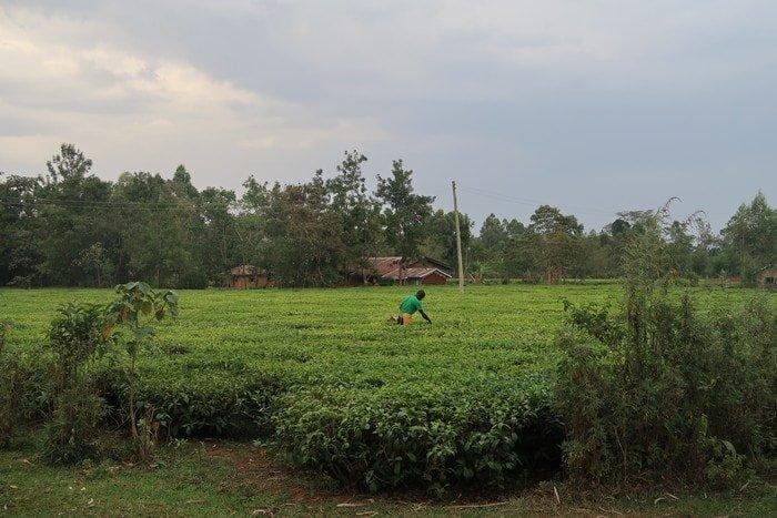 siti di incontri per vedove in Kenya
