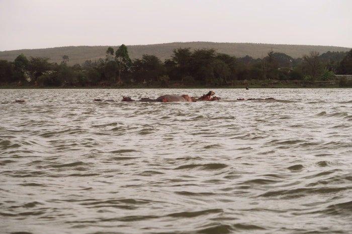 """alt=""""Il lago Naivasha, una delle destinazioni top di un viaggio in Kenya fai da te"""""""