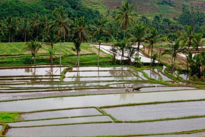 Viaggio di gruppo in Indonesia: Sumba, Flores e Java