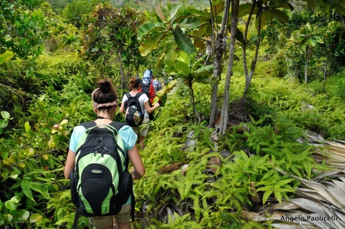 "alt=""Trekking nella giungla alle Seychelles"""