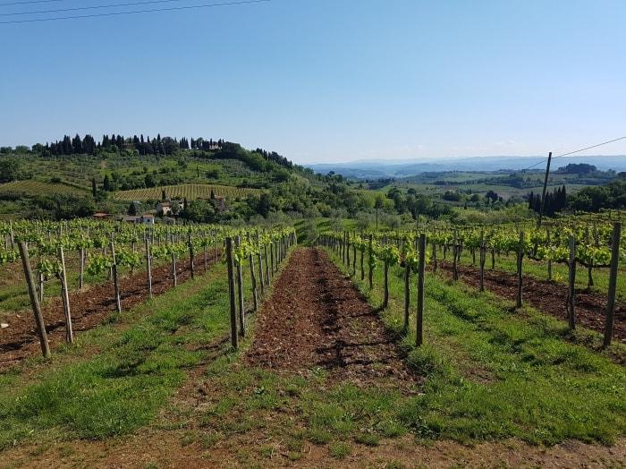 "alt=""Trekking in Toscana e i vigneti del Chianti"""