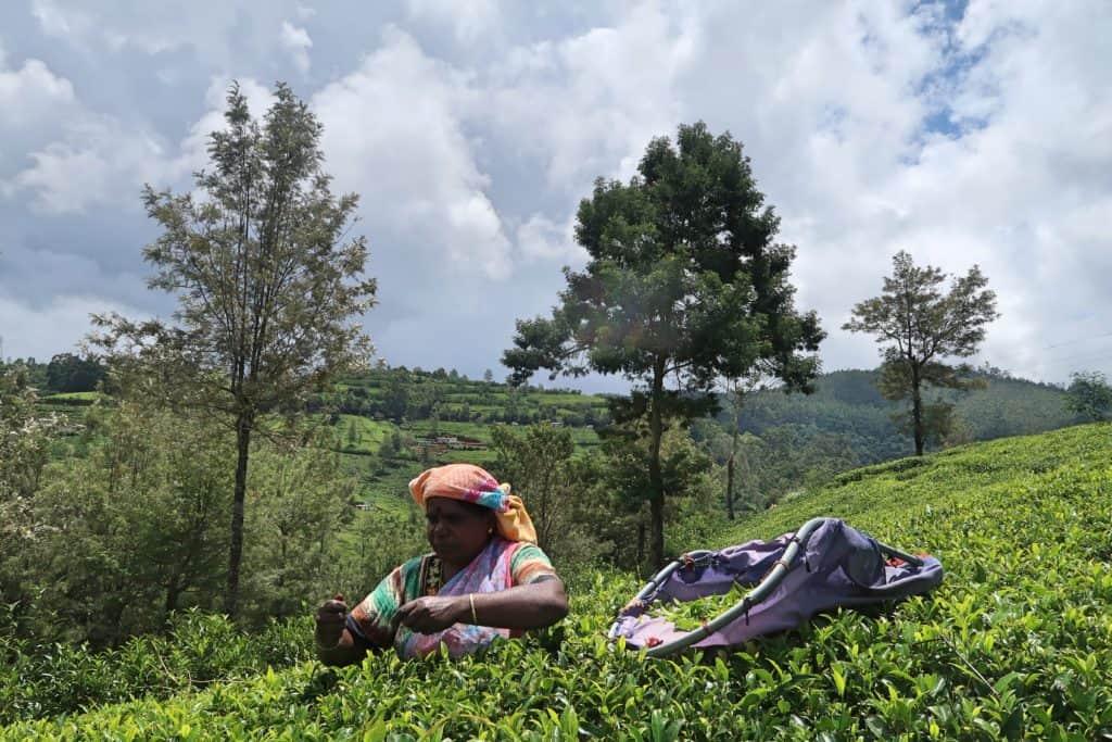 """alt=""""Tra le piantagioni di té e i paesaggi surreali della Hill Country"""""""