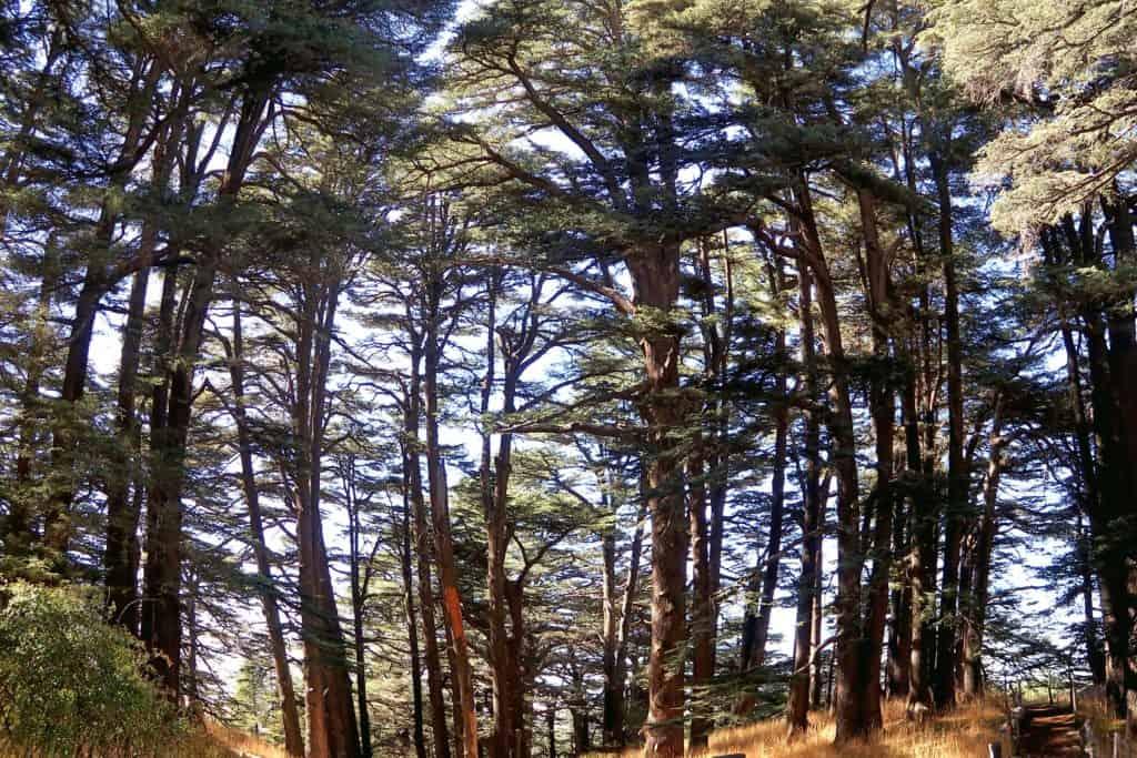 """alt=""""Itinerario e consigli utili per organizzare un viaggio in Libano fai da te"""""""