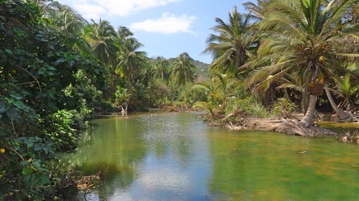 """alt=""""La selva nel Parque Nacional Tayrona"""""""